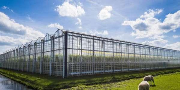 Nizozemska poljoprivreda i njezin značaj u Svijetu.